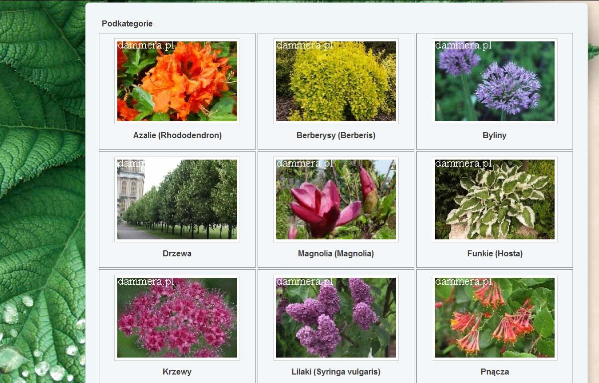 Portal ogrodniczy Dammera - katalog produktów
