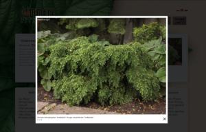 Portal ogrodniczy Dammera - galerie zdjęć