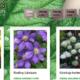 Strona www dla szkółki Dammera